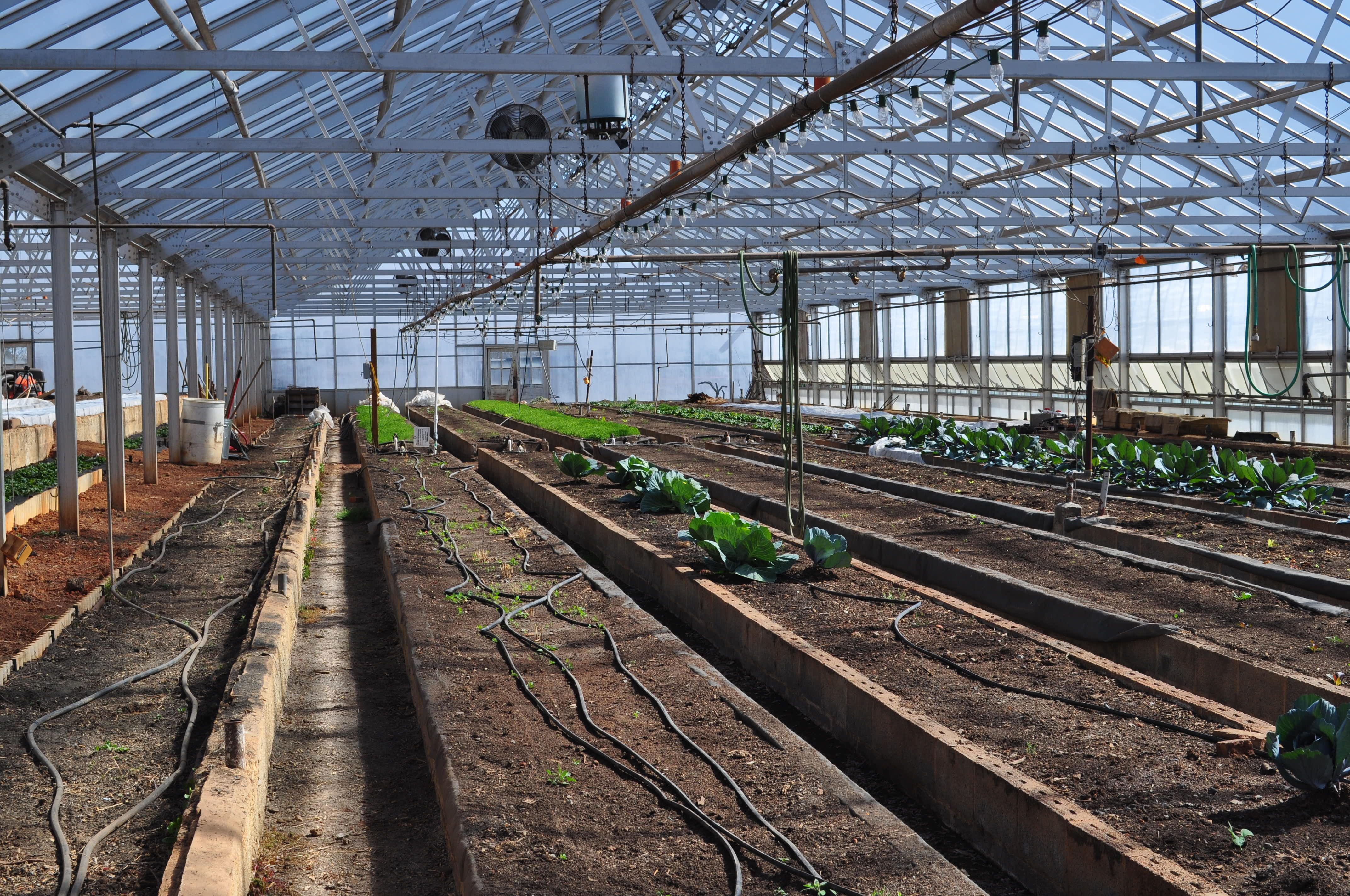 Vermicomposting on a Large Scale | Eco Future Development